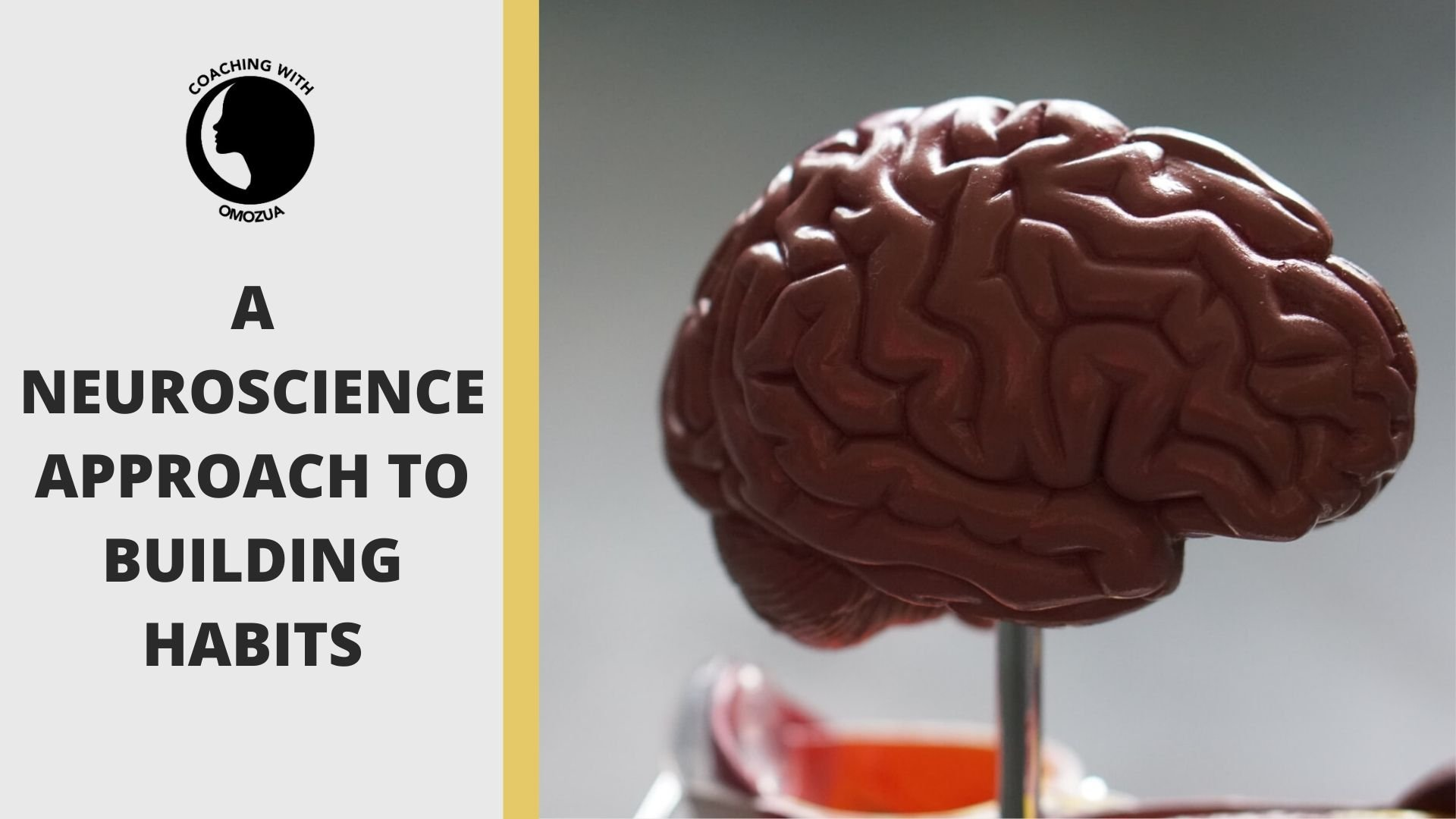 A neuroscience approach to building habits
